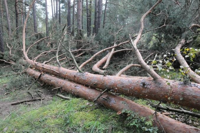 деревом убило мужчину