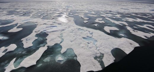 В арктических льдах обнаружен неизвестный монстр