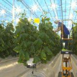 первый урожай овощей В Антарктиде