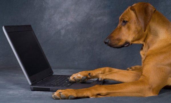 соцсеть для животных