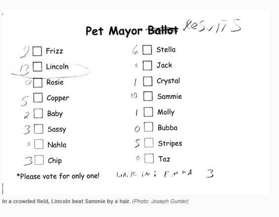 Коза стала мэром