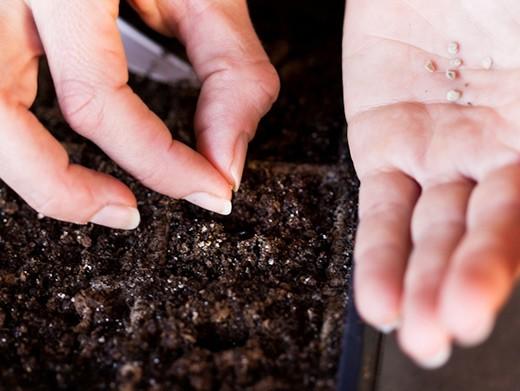Как правильно сеять семена по лунному календарю