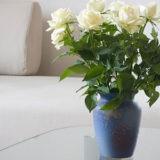 Как сохранить розы